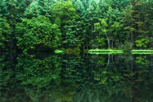 札幌市豊平区にある西岡公園~湿地帯植物などの自然満載の公園~